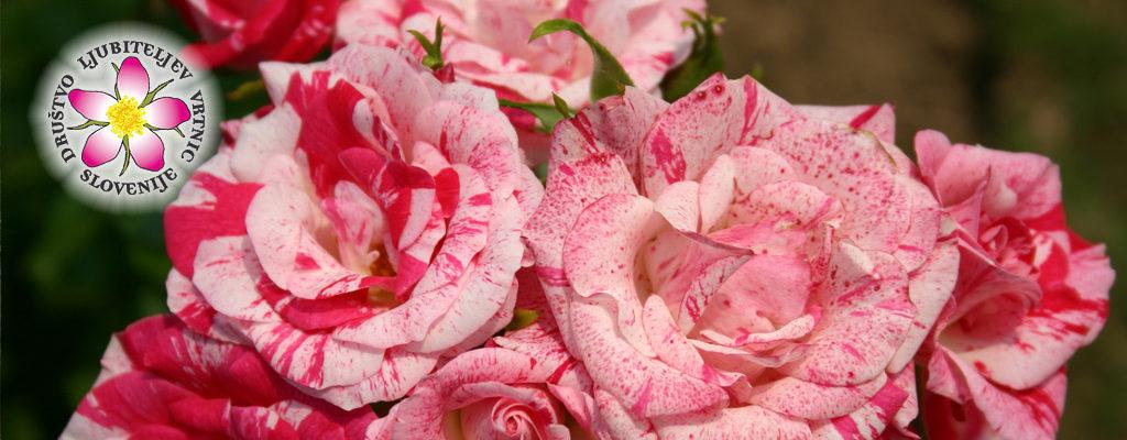 Dnevi vrtnic v Kopru od 2. 6. do 4. 6. 2016 na ploščadi nasproti tržnice