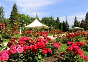 Rozarij Arboretuma Volčji Potok na rožnem zemljevidu sveta