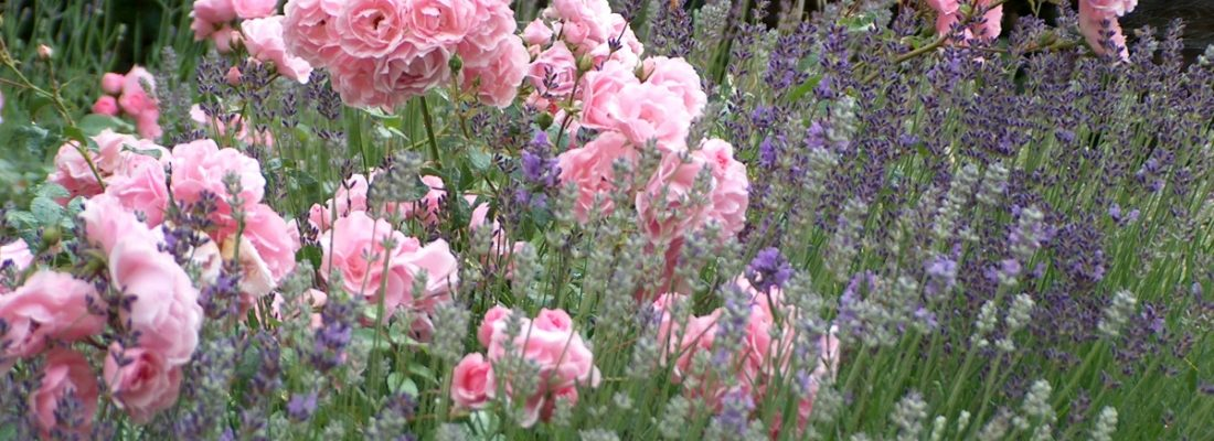 Sprehod med vrtnicami v parku Valdoltra