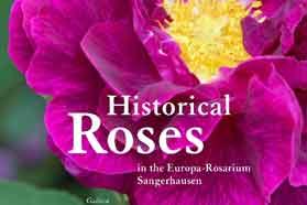 Zgodovinske vrtnice v Europa-Rosarium Sangerhausen