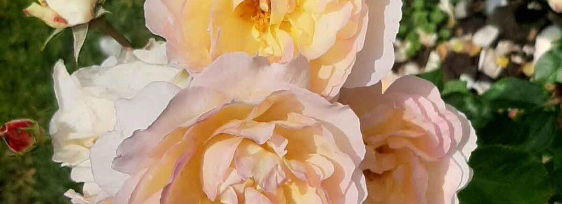 Srečanje s Trubarjem v rožniku v Baden Badnu